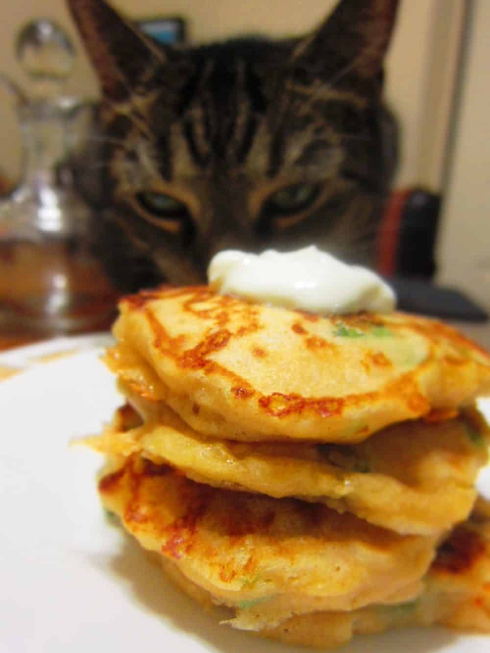 cat eating cheesy savory pancakes with scallions