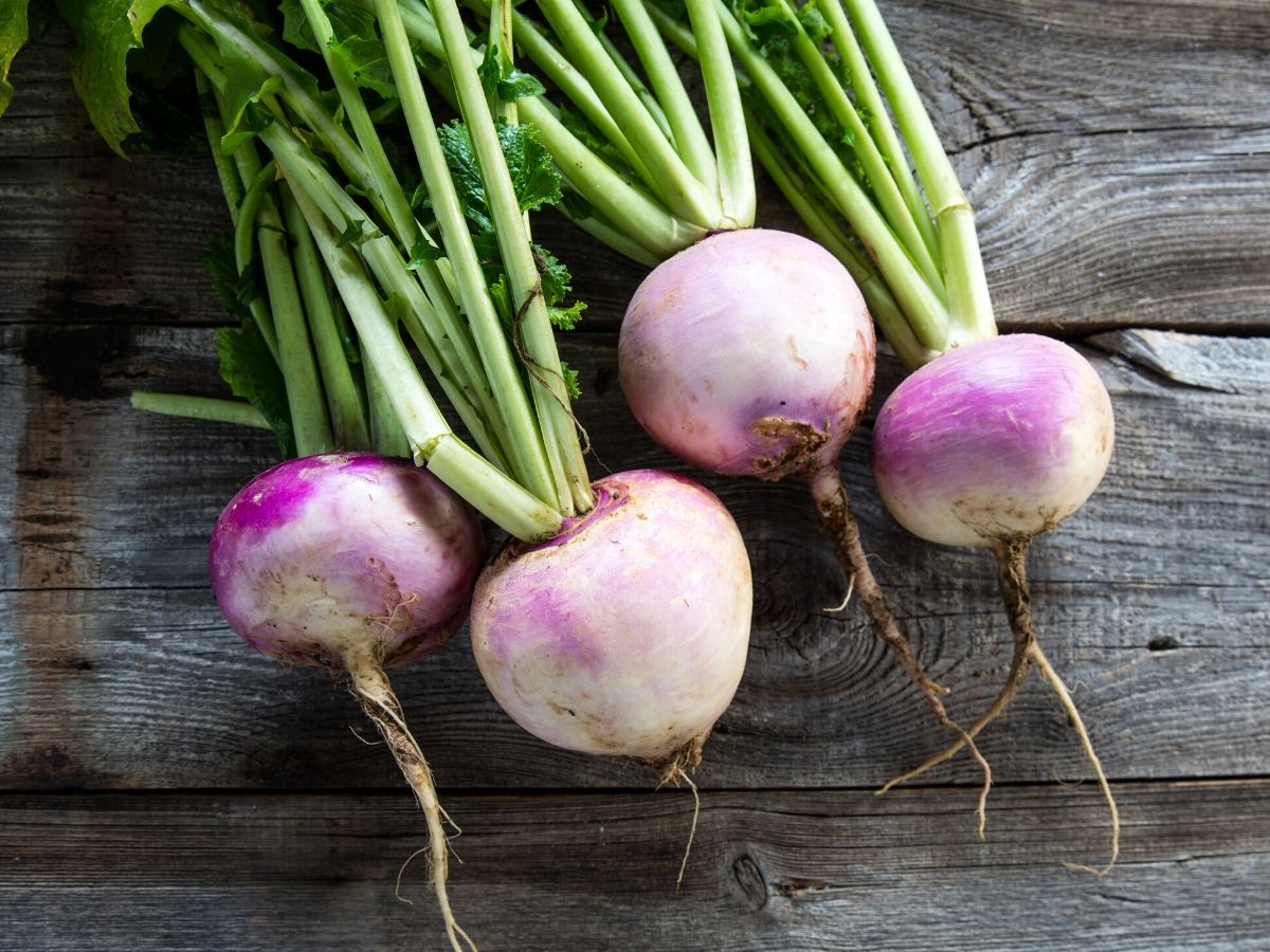 pictures of turnips